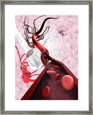 Stem Cells And Tissue Types Framed Print