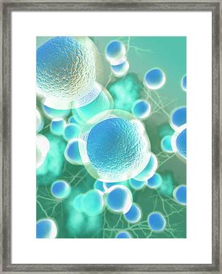 Stem Cells Framed Print by Gunilla Elam