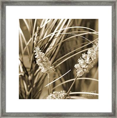 Stems Framed Print by Yanni Theodorou