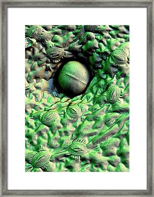 Stevia Leaf Trichome Framed Print