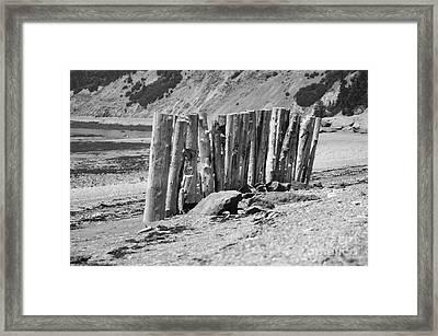 Stick Together Framed Print by Randi Grace Nilsberg