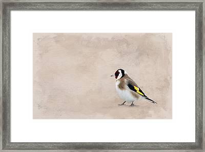 Stieglitz Framed Print by Heike Hultsch