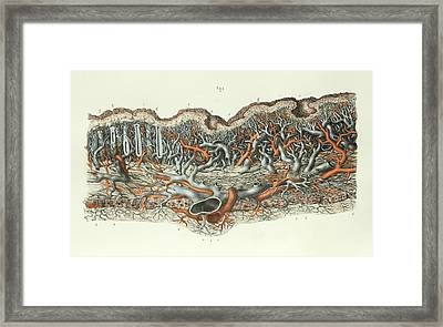 Stomach Lining Framed Print by Science Photo Library