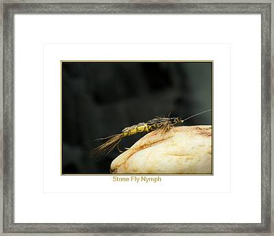 Stone Fly Nymph Framed Print by Neal Blizzard