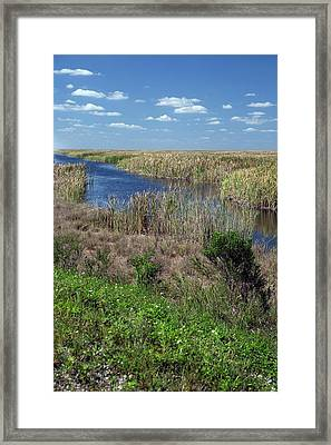 Stormwater Treatment Area Framed Print