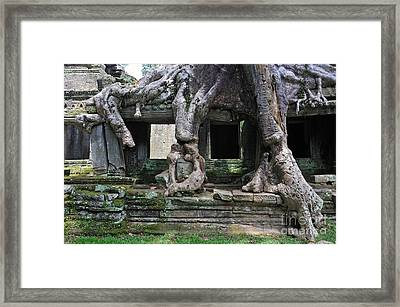 Strangler Fig Tree Roots On Preah Khan Temple Framed Print by Sami Sarkis