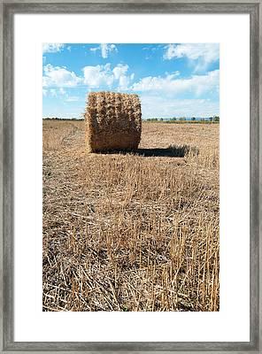Straw Bales At A Stubbel Field Framed Print by Svetoslav Radkov