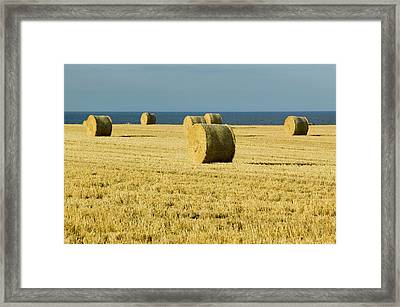 Straw Bales In A Field Framed Print by Ashley Cooper
