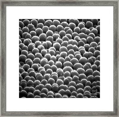 Streptococcus Pyogenes Framed Print