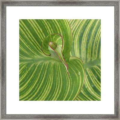 Striped Canna Leaf Abstract Framed Print by Anna Miller