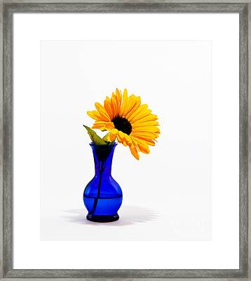 Framed Print featuring the photograph Study In Blue by Cecil Fuselier