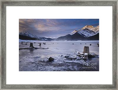 Stumps At Spray Lakes Framed Print by Ginevre Smith