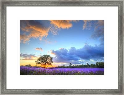 Stunning Atmospheric Sunset Over Vibrant Lavender Fields In Summ Framed Print