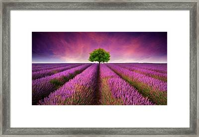 Stunning Lavender Field Digital Painting Framed Print