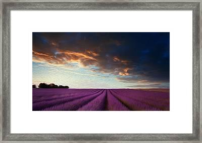 Stunning Lavender Field Landscape At Sunset In Summer Framed Print by Matthew Gibson