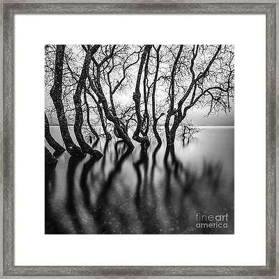 Submerging Trees Framed Print by John Farnan