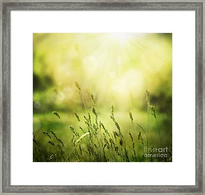 Summer Background Framed Print by Mythja  Photography
