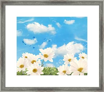 Summer Daisies Framed Print