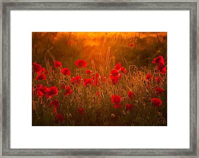 Summer Dream Framed Print