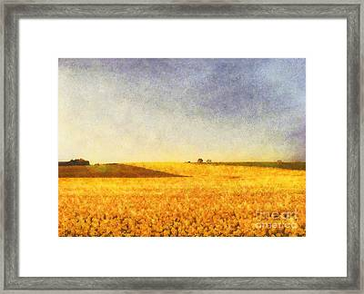 Summer Field Framed Print by Pixel Chimp