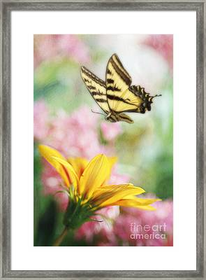 Summer Flight Framed Print