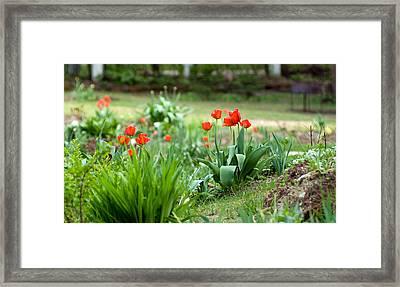 Summer Garden Framed Print by Viacheslav Savitskiy
