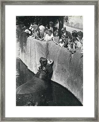 Summer Snaps At The Zoo Framed Print by Retro Images Archive