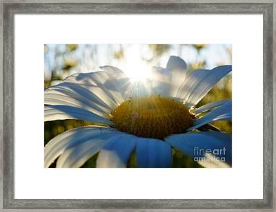 Sun Flower Framed Print by Kandids By Katy