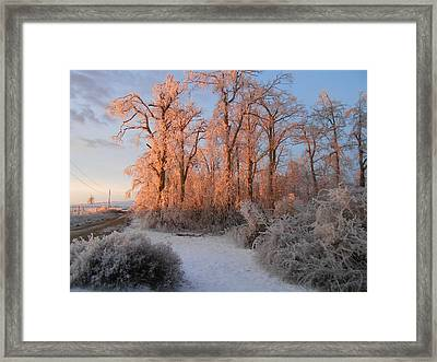 Sun Rising Framed Print by Diannah Lynch