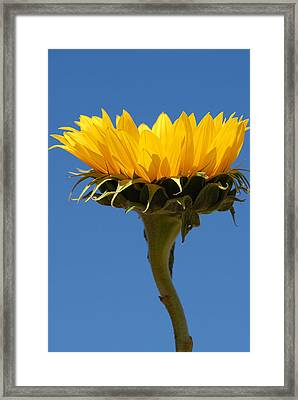 Framed Print featuring the photograph Sunflower And Sky by Susan D Moody
