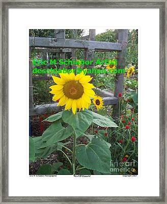 Sunflower Framed Print by Eric  Schiabor