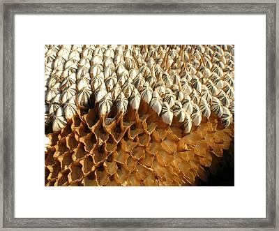 Sunflower Geometry Framed Print
