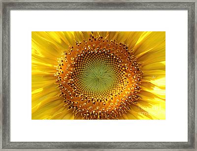 Framed Print featuring the photograph Sunflower by Lisa L Silva