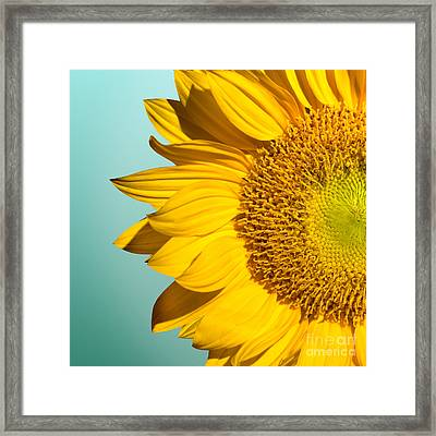Sunflower Framed Print by Mark Ashkenazi