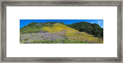 Sunflowers And Larkspur Wildflowers Framed Print by Panoramic Images