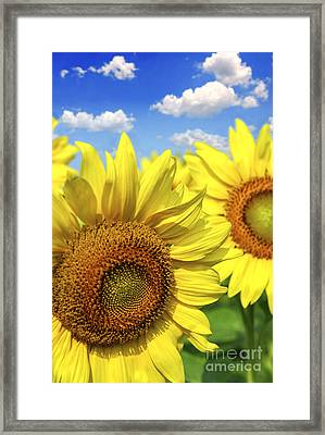 Sunflowers Framed Print by Elena Elisseeva
