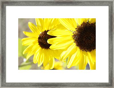 Sunflowers  Framed Print by Les Cunliffe