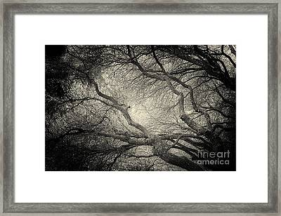 Sunlight Through Branches Of A Tree Framed Print