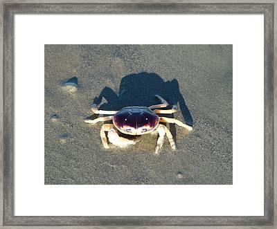Sunning Sand Crab Framed Print by Joseph Hendrix