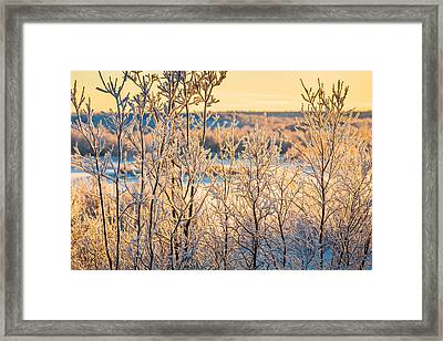 Sunset And Trees In The Frozen Framed Print