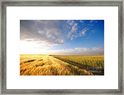 Sunset Field Framed Print by Michal Bednarek