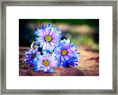 Sunset Flowers Framed Print by Tammy Smith