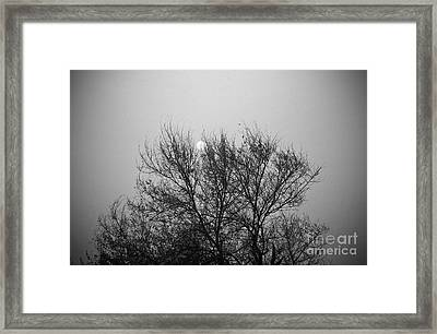 Framed Print featuring the photograph Sunset In Black And White by Mohamed Elkhamisy