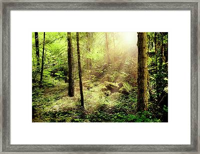 Sunshine From Above Framed Print by Ramona Murdock