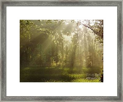 Sunshine Morning Framed Print