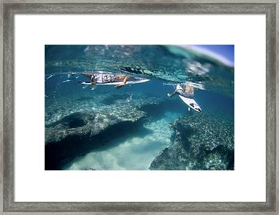 Surfers Over Reef. Framed Print by Sean Davey