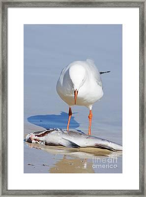 Surprised Seagull Framed Print