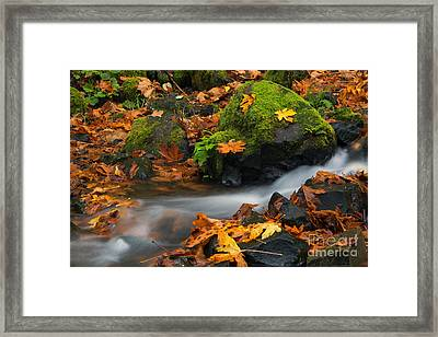 Surrounded By The Season  Framed Print
