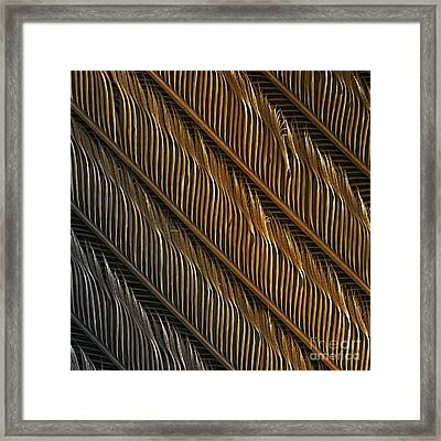 Swallow Feather Detail, Sem Framed Print