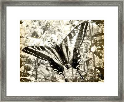 Swallow Tail Framed Print